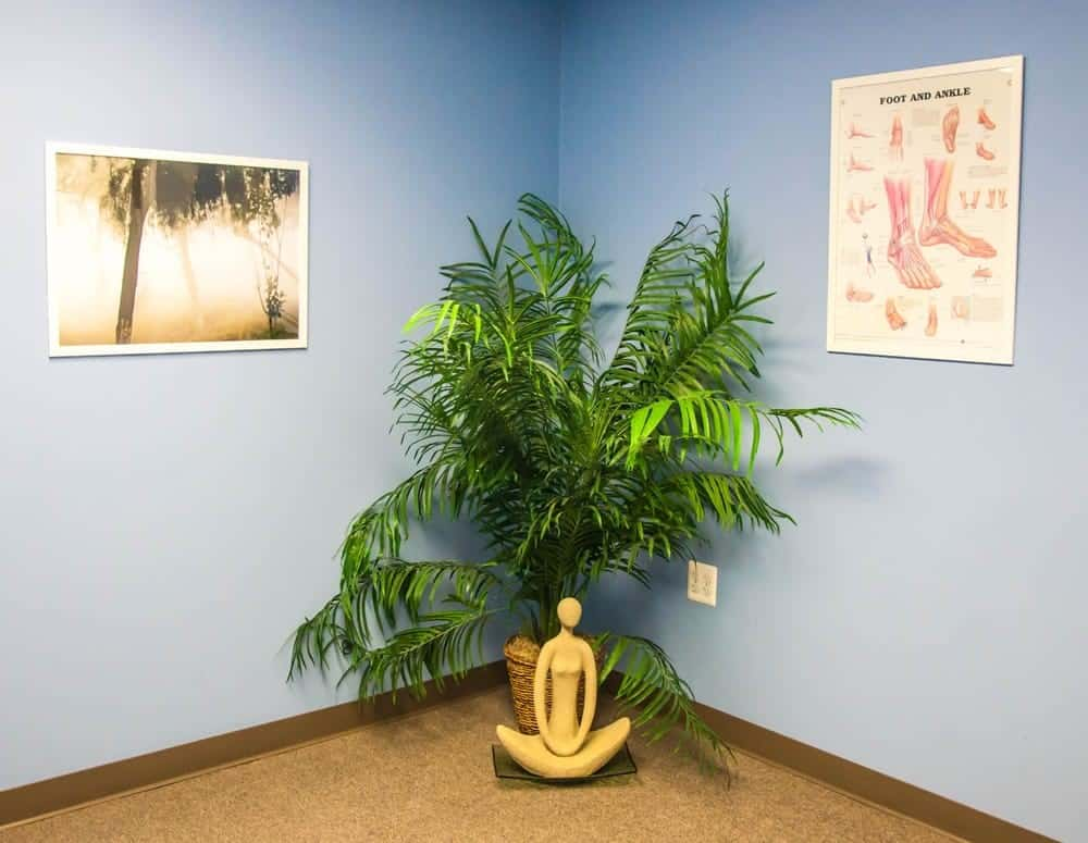 professional environment physical therapy
